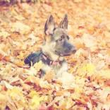Outdoor-Junghunde.jpg