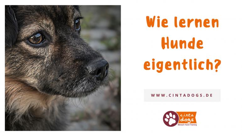 Wie lernen Hunde überhaupt und was hat das mit Strafen und Verstärkung auf sich?