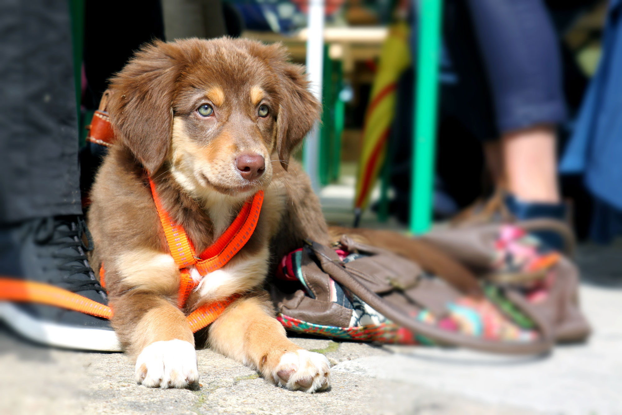 cintadogs - Hundeschule in Melle